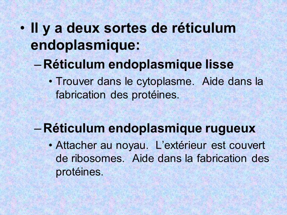 Il y a deux sortes de réticulum endoplasmique: