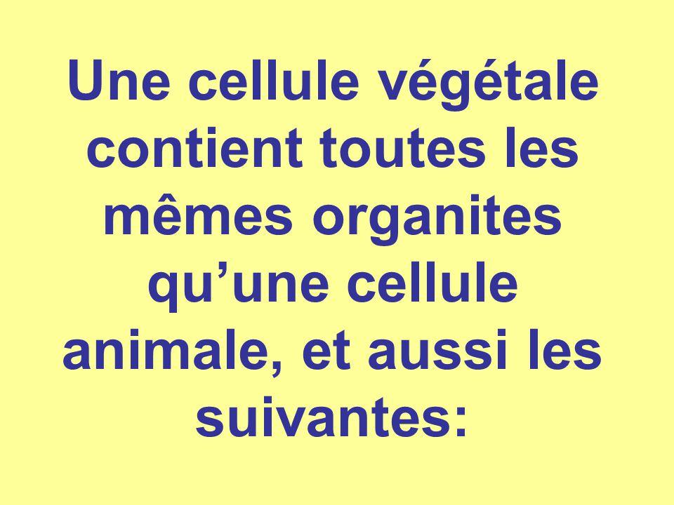 Une cellule végétale contient toutes les mêmes organites qu'une cellule animale, et aussi les suivantes: