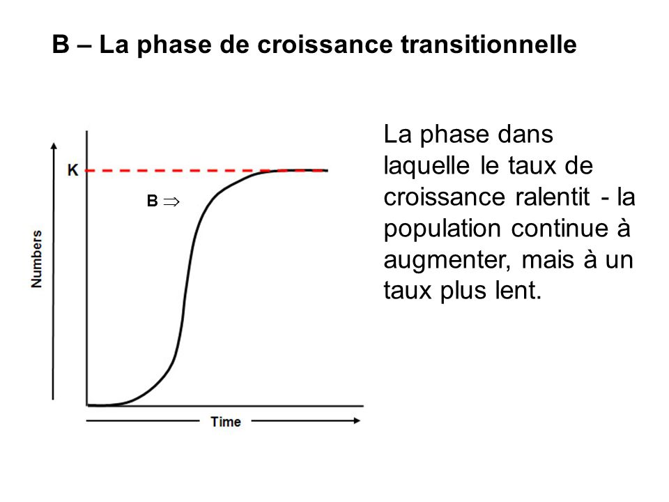 B – La phase de croissance transitionnelle