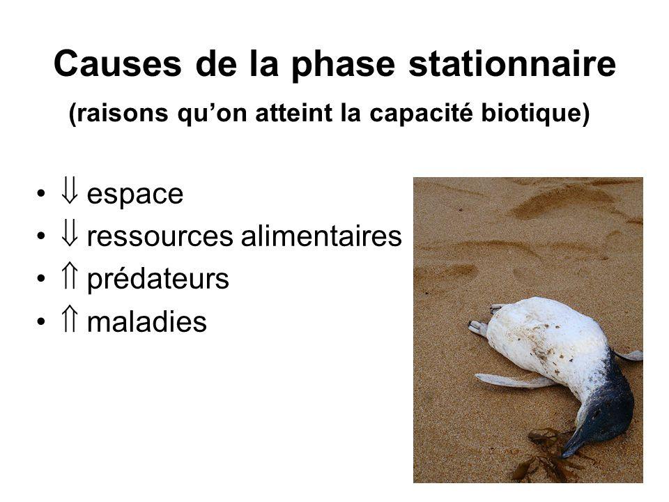 Causes de la phase stationnaire