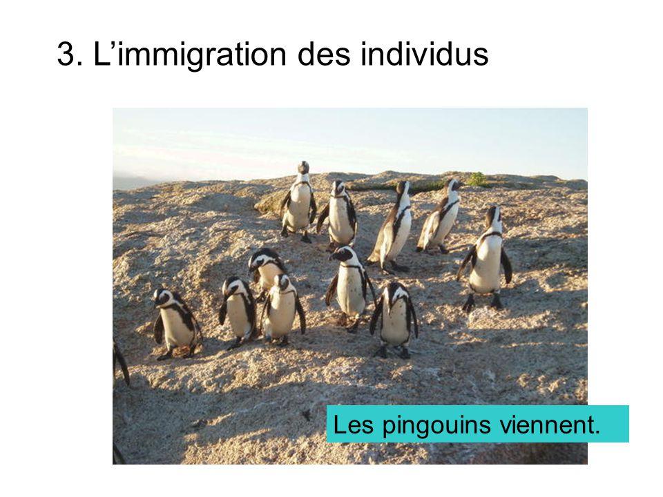 3. L'immigration des individus