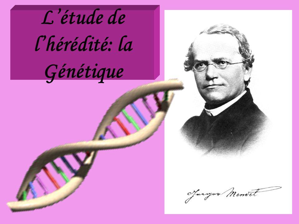 L'étude de l'hérédité: la Génétique