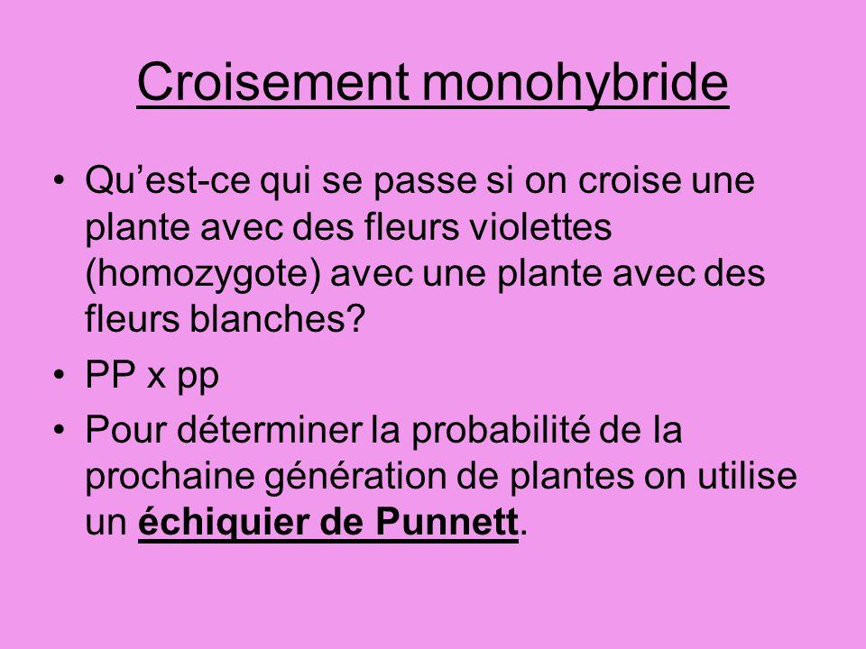 Croisement monohybride