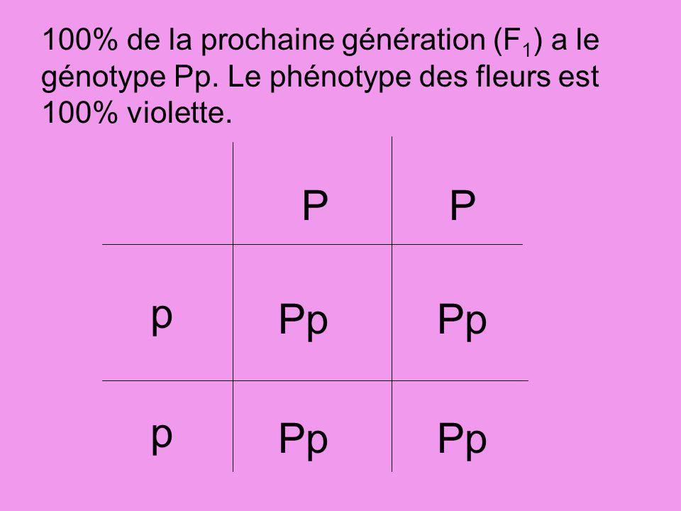 100% de la prochaine génération (F1) a le génotype Pp