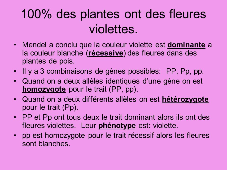 100% des plantes ont des fleures violettes.