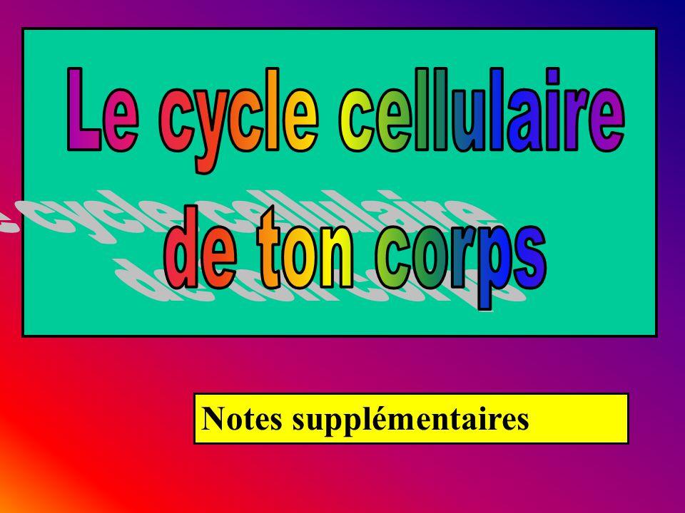 Le cycle cellulaire de ton corps Notes supplémentaires