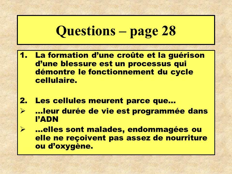 Questions – page 28 La formation d'une croûte et la guérison d'une blessure est un processus qui démontre le fonctionnement du cycle cellulaire.