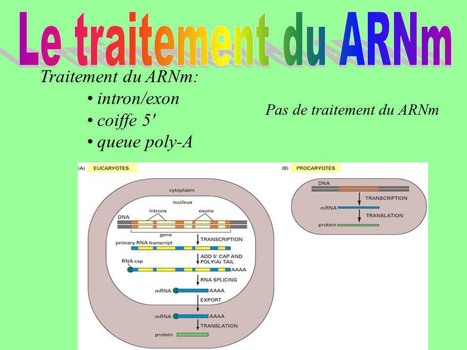 Le traitement du ARNm Traitement du ARNm: • intron/exon • coiffe 5