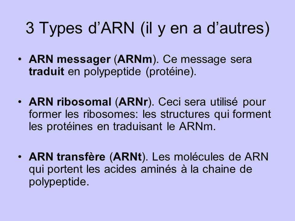 3 Types d'ARN (il y en a d'autres)