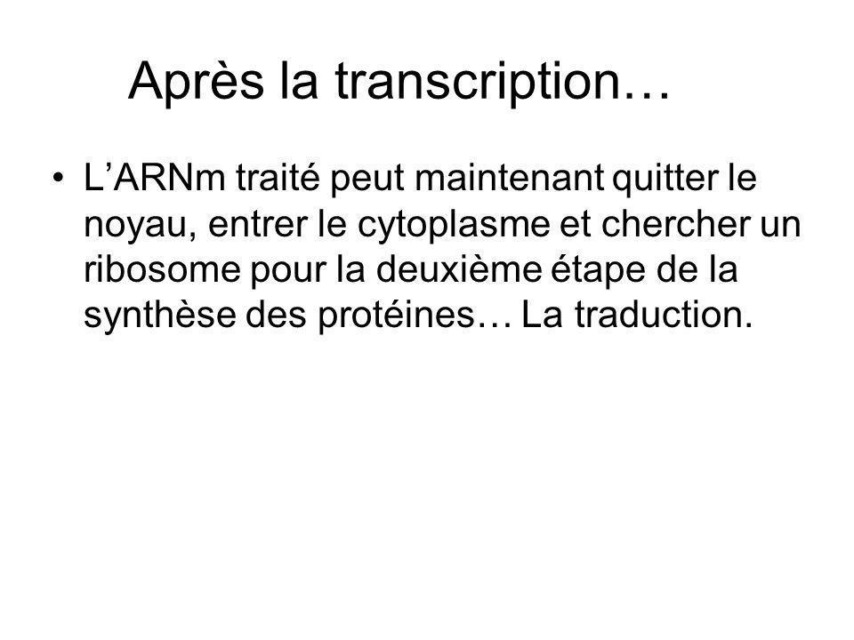 Après la transcription…