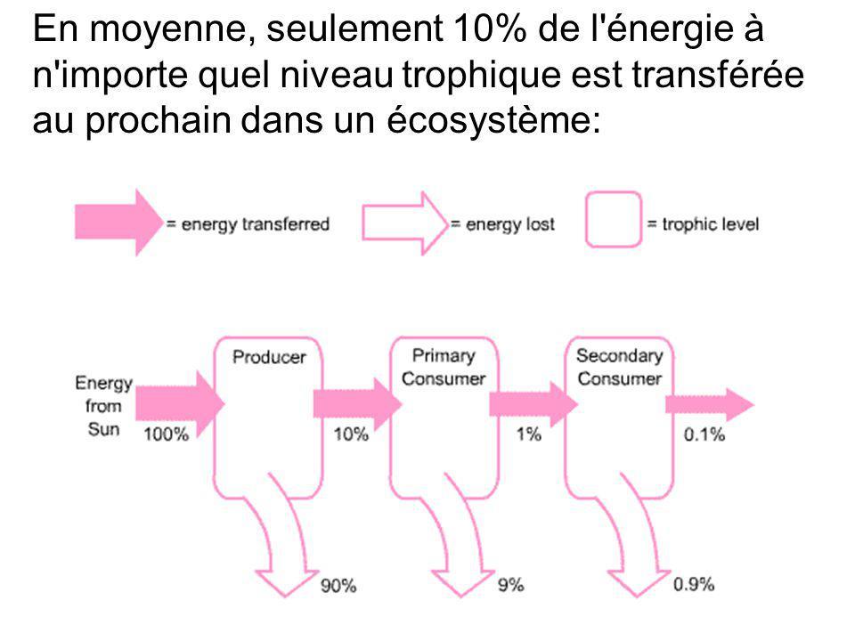 En moyenne, seulement 10% de l énergie à n importe quel niveau trophique est transférée au prochain dans un écosystème: