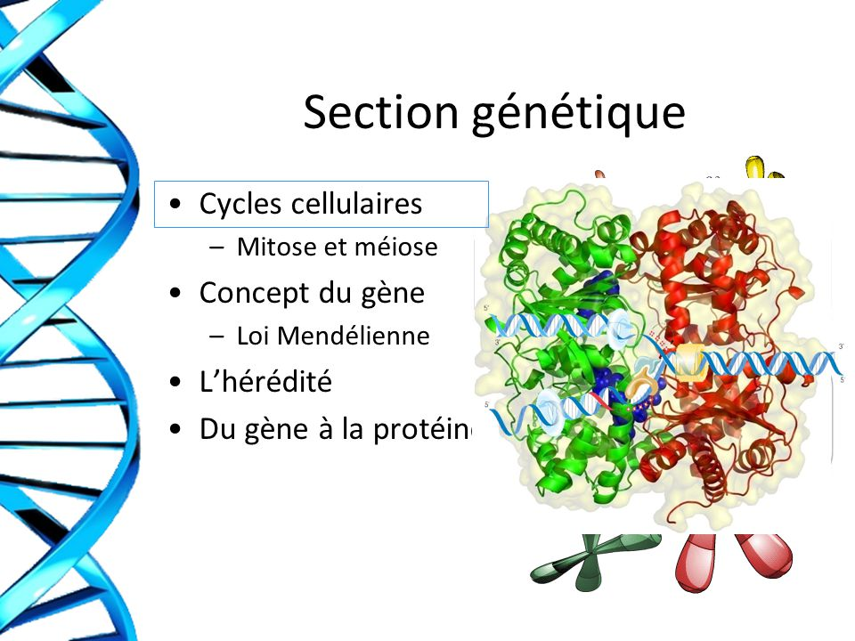 Section génétique Cycles cellulaires Concept du gène L'hérédité