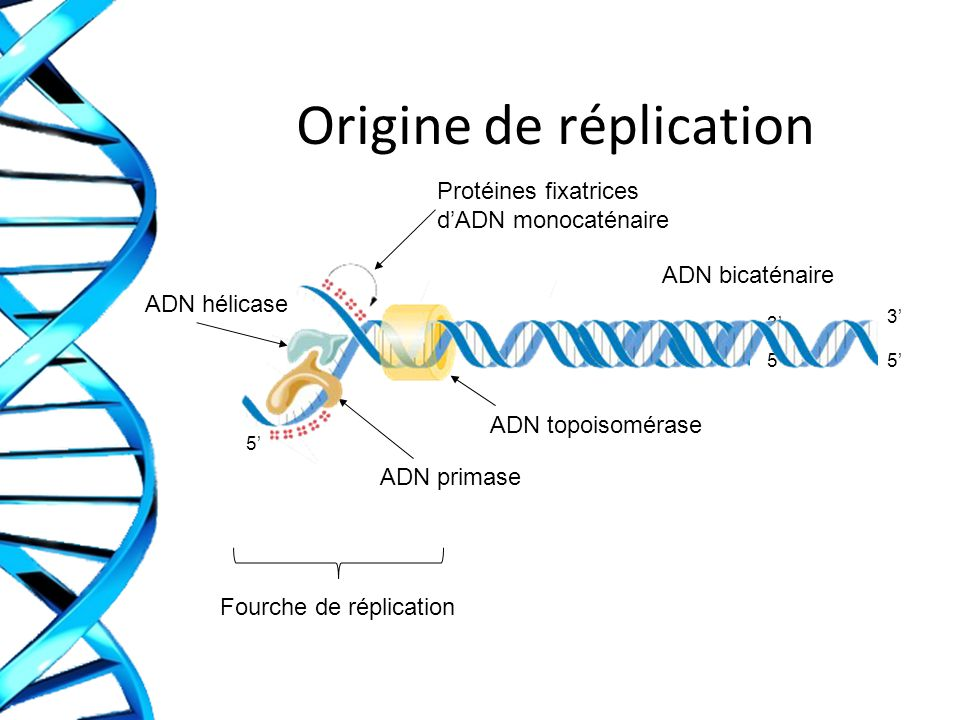 Origine de réplication