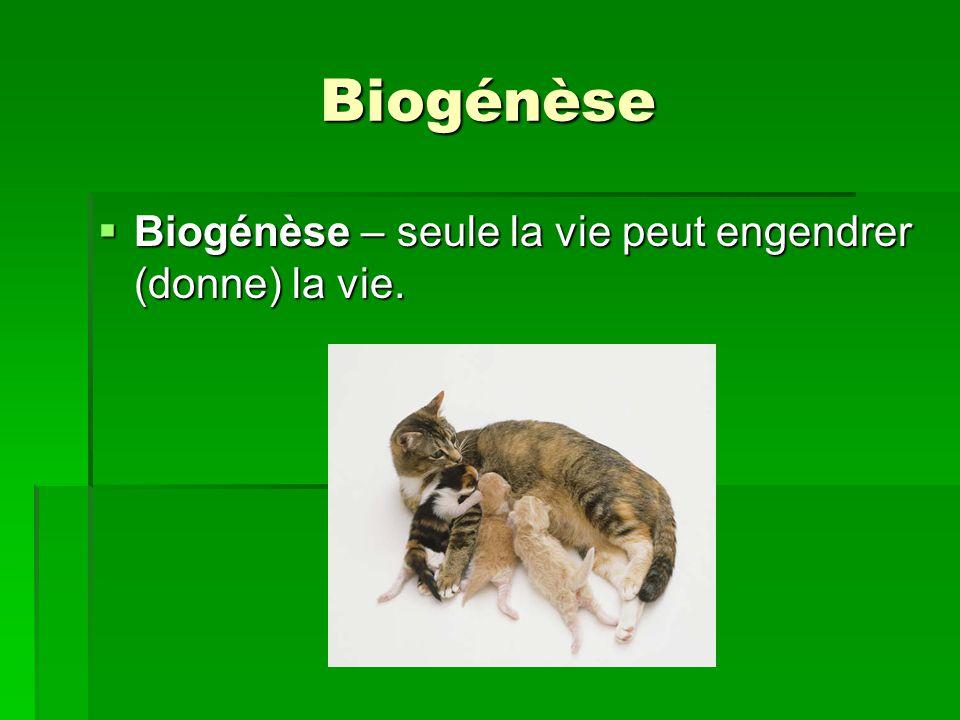 Biogénèse Biogénèse – seule la vie peut engendrer (donne) la vie.
