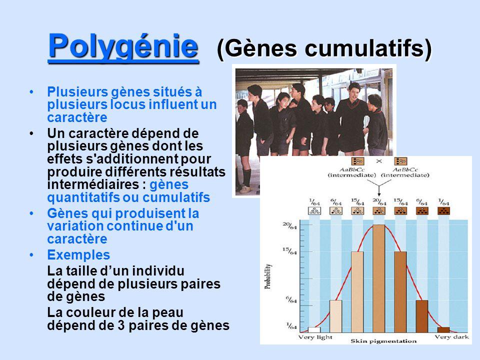 Polygénie (Gènes cumulatifs)