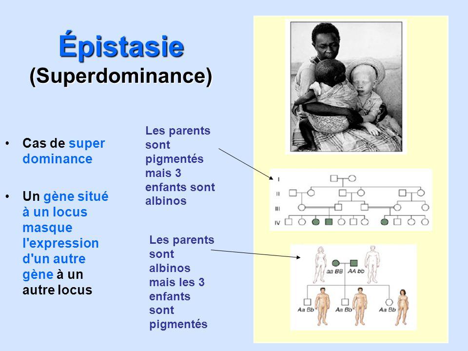 Épistasie (Superdominance)