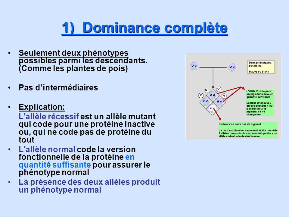 1) Dominance complète Seulement deux phénotypes possibles parmi les descendants. (Comme les plantes de pois)