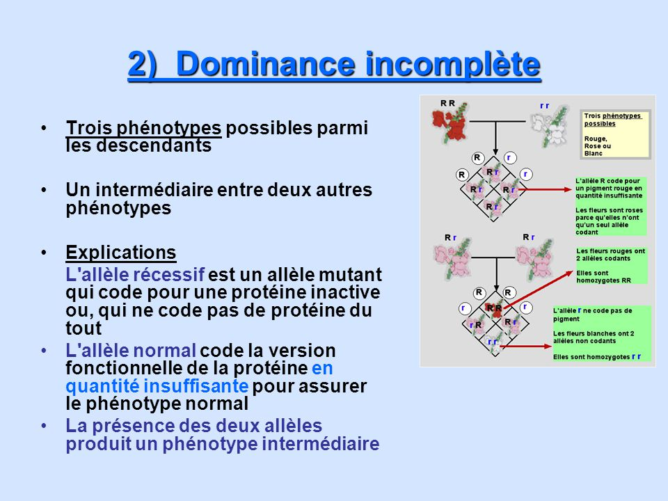 2) Dominance incomplète