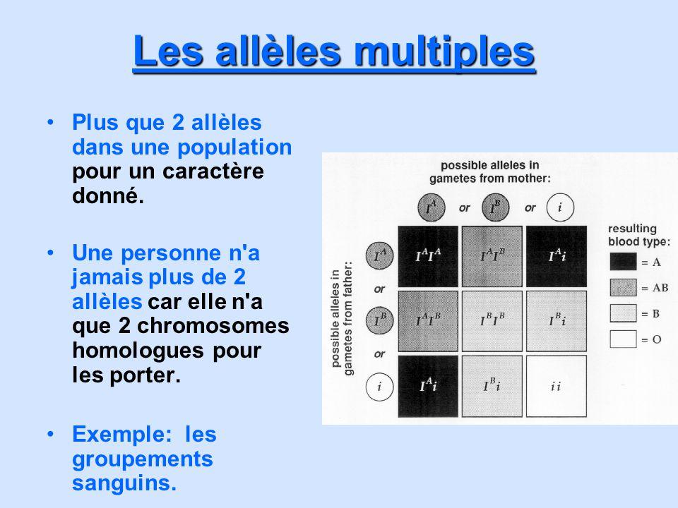 Les allèles multiples Plus que 2 allèles dans une population pour un caractère donné.