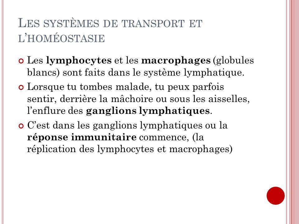 Les systèmes de transport et l'homéostasie