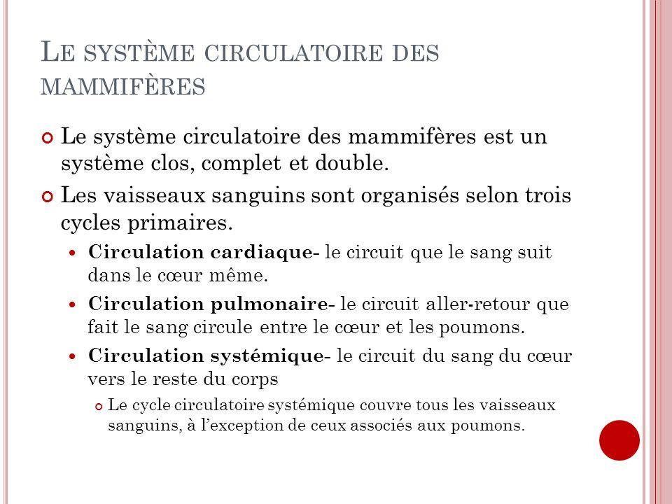 Le système circulatoire des mammifères