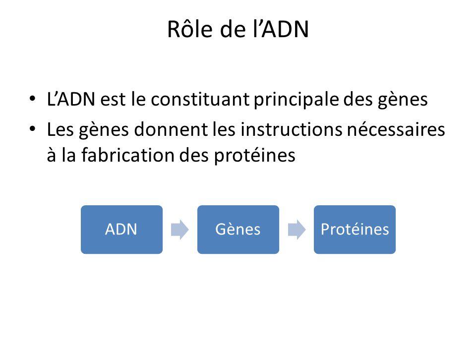 Rôle de l'ADN L'ADN est le constituant principale des gènes