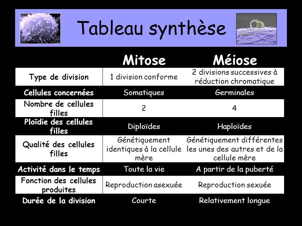 Tableau synthèse Mitose Méiose Type de division 1 division conforme