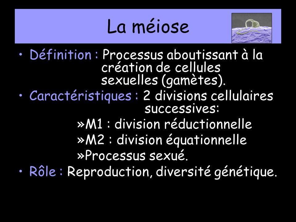 La méiose Définition : Processus aboutissant à la création de cellules sexuelles (gamètes).