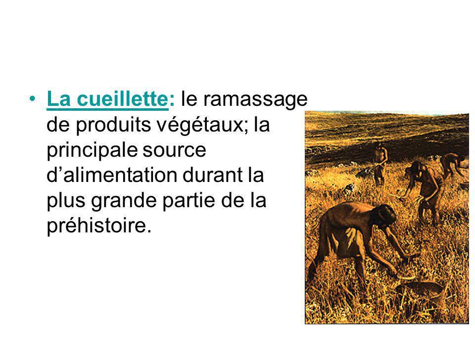 La cueillette: le ramassage de produits végétaux; la principale source d'alimentation durant la plus grande partie de la préhistoire.
