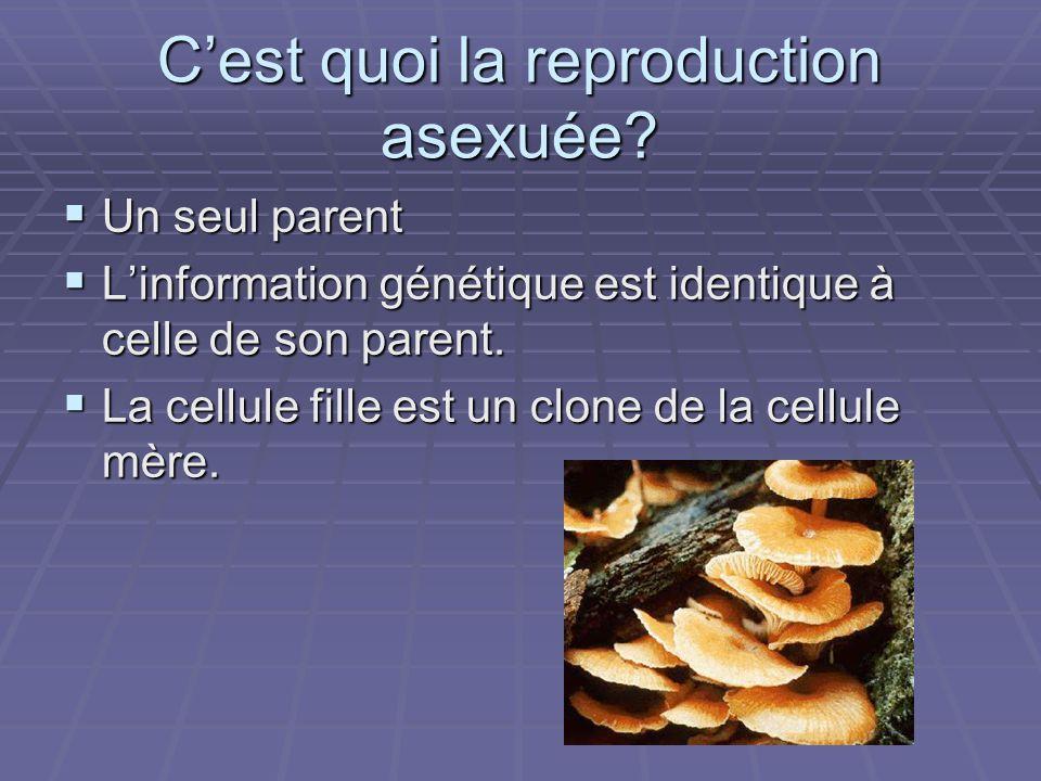 C'est quoi la reproduction asexuée
