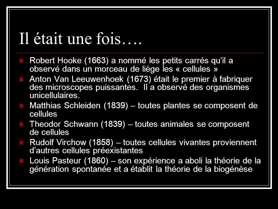Il était une fois…. Robert Hooke (1663) a nommé les petits carrés qu'il a observé dans un morceau de liège les « cellules »