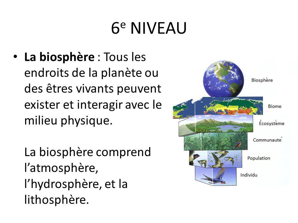 6e NIVEAU