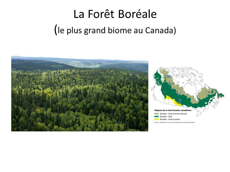La Forêt Boréale (le plus grand biome au Canada)