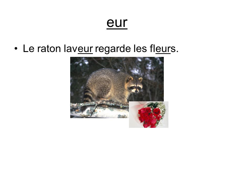 eur Le raton laveur regarde les fleurs.