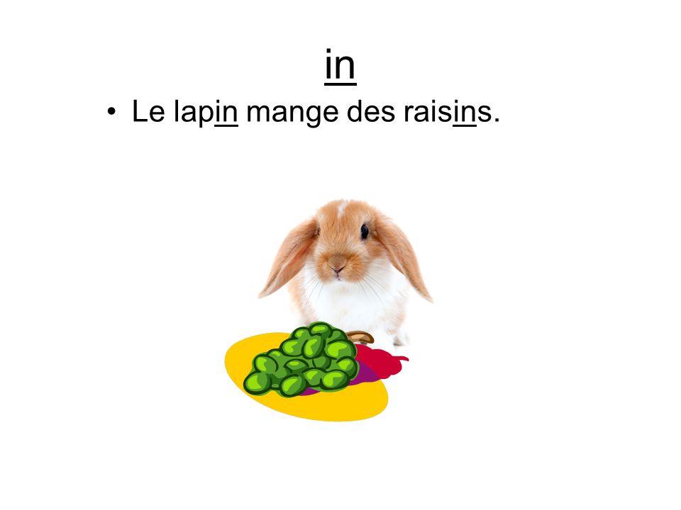 in Le lapin mange des raisins.