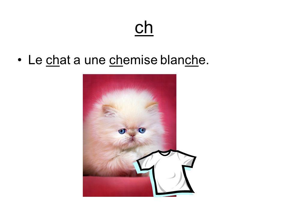 ch Le chat a une chemise blanche.