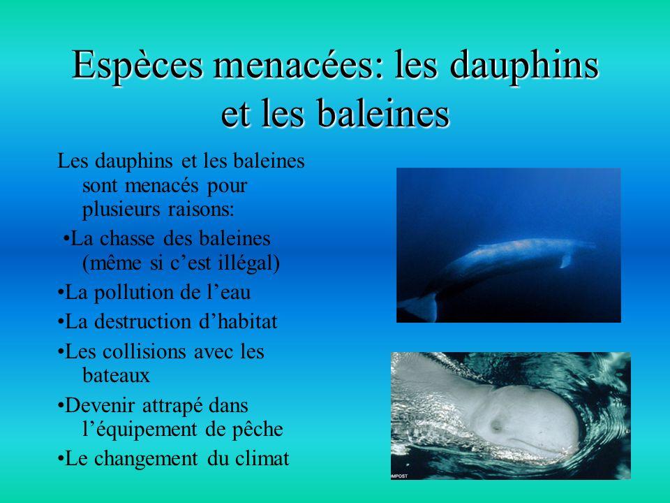 Espèces menacées: les dauphins et les baleines