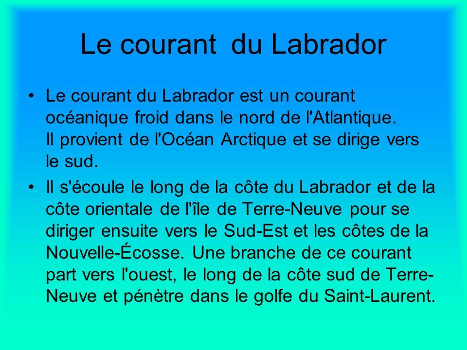 Le courant du Labrador