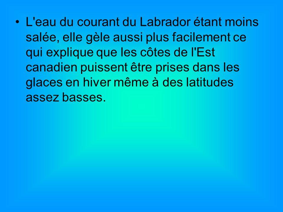 L eau du courant du Labrador étant moins salée, elle gèle aussi plus facilement ce qui explique que les côtes de l Est canadien puissent être prises dans les glaces en hiver même à des latitudes assez basses.