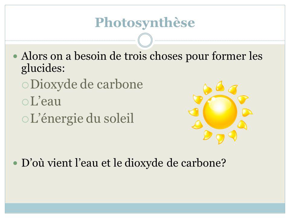 Photosynthèse Dioxyde de carbone L'eau L'énergie du soleil