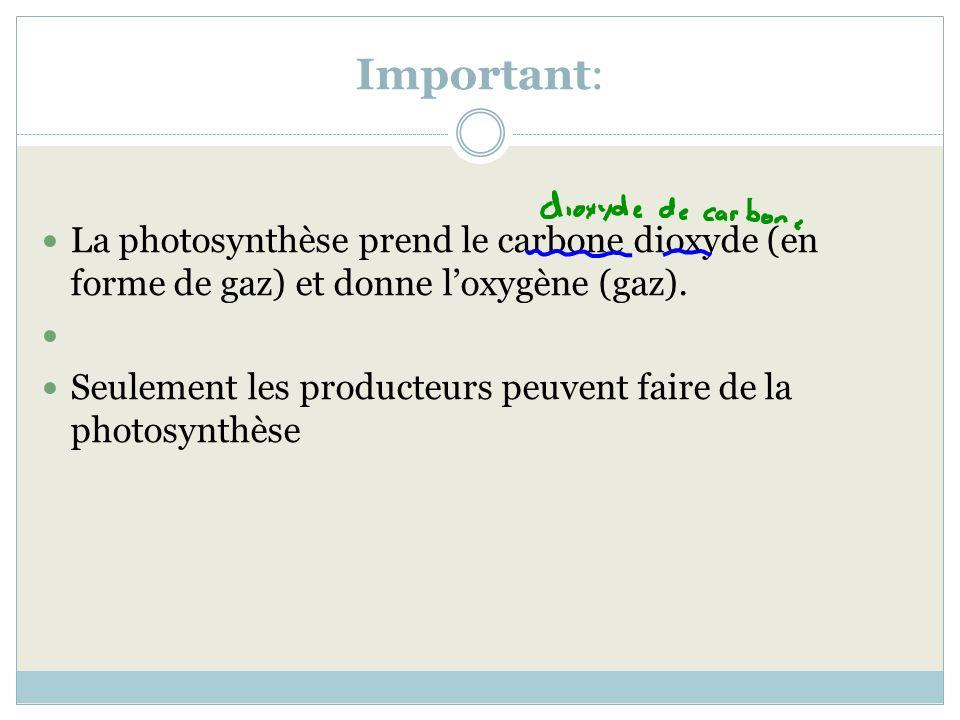 Important: La photosynthèse prend le carbone dioxyde (en forme de gaz) et donne l'oxygène (gaz).
