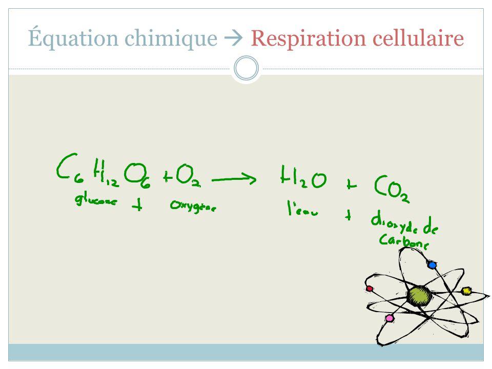 Équation chimique  Respiration cellulaire