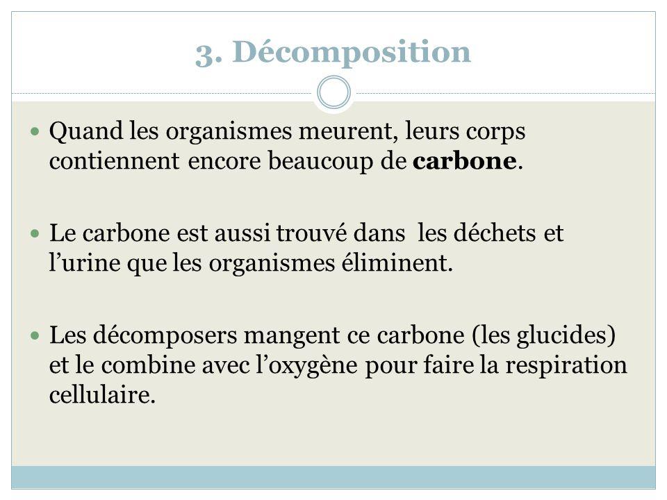 3. Décomposition Quand les organismes meurent, leurs corps contiennent encore beaucoup de carbone.