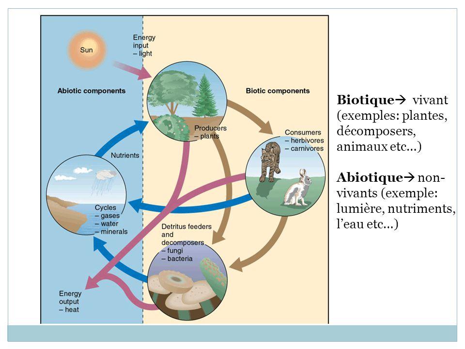 Biotique vivant (exemples: plantes, décomposers, animaux etc…) Abiotique non-vivants (exemple: lumière, nutriments, l'eau etc…)