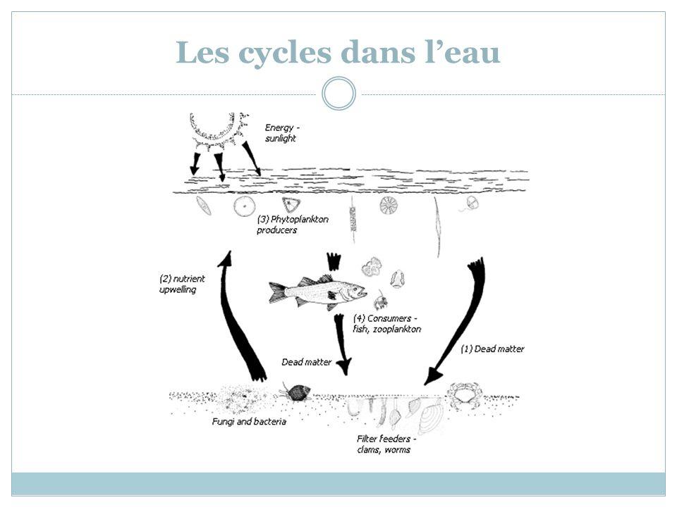 Les cycles dans l'eau