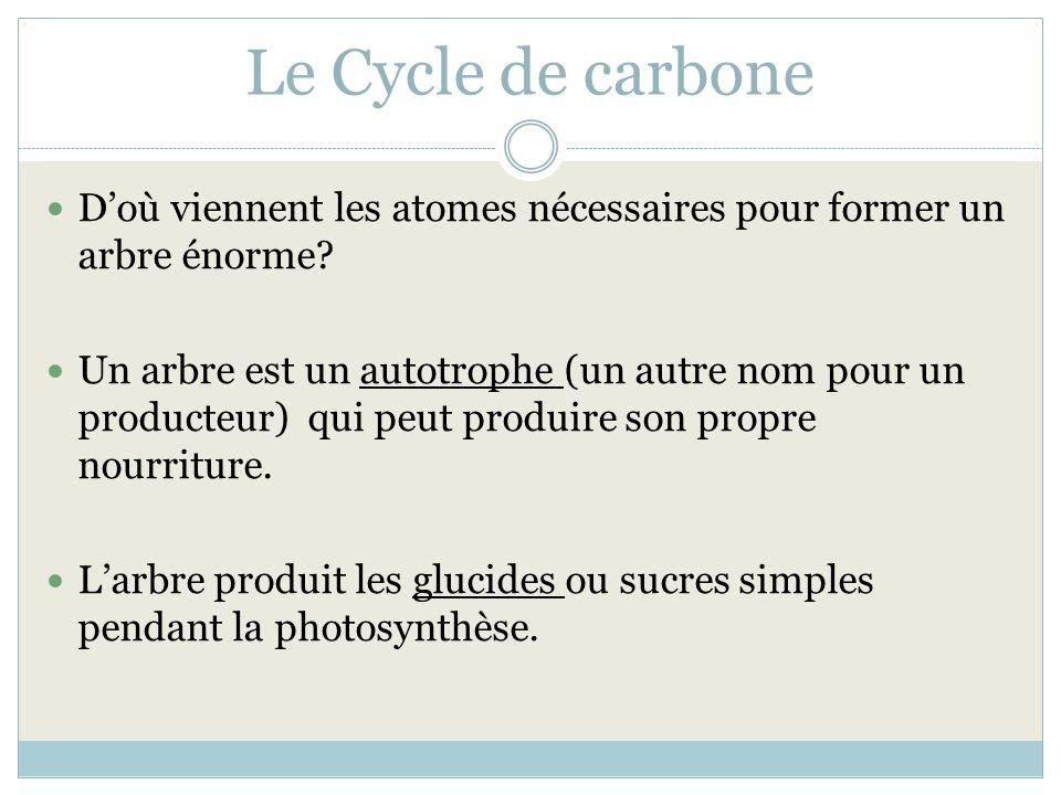 Le Cycle de carbone D'où viennent les atomes nécessaires pour former un arbre énorme