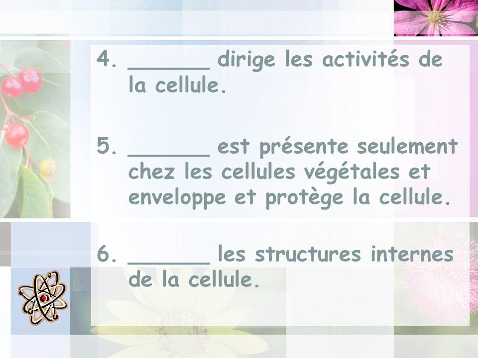 ______ dirige les activités de la cellule.