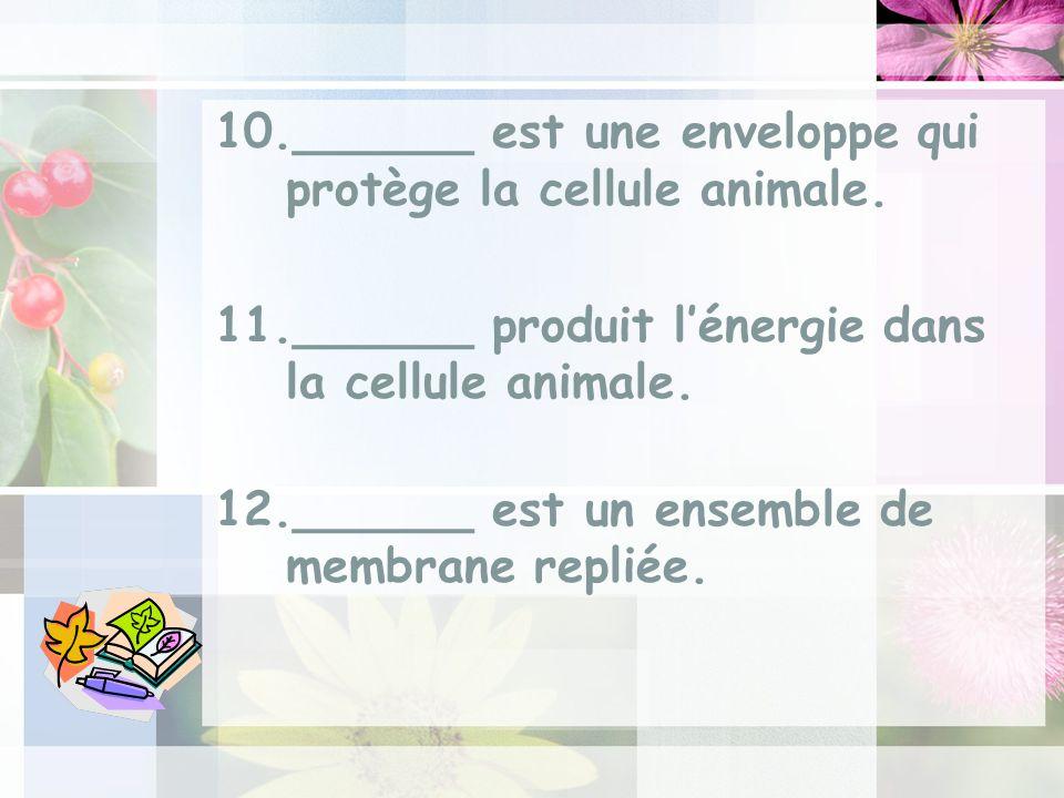 ______ est une enveloppe qui protège la cellule animale.
