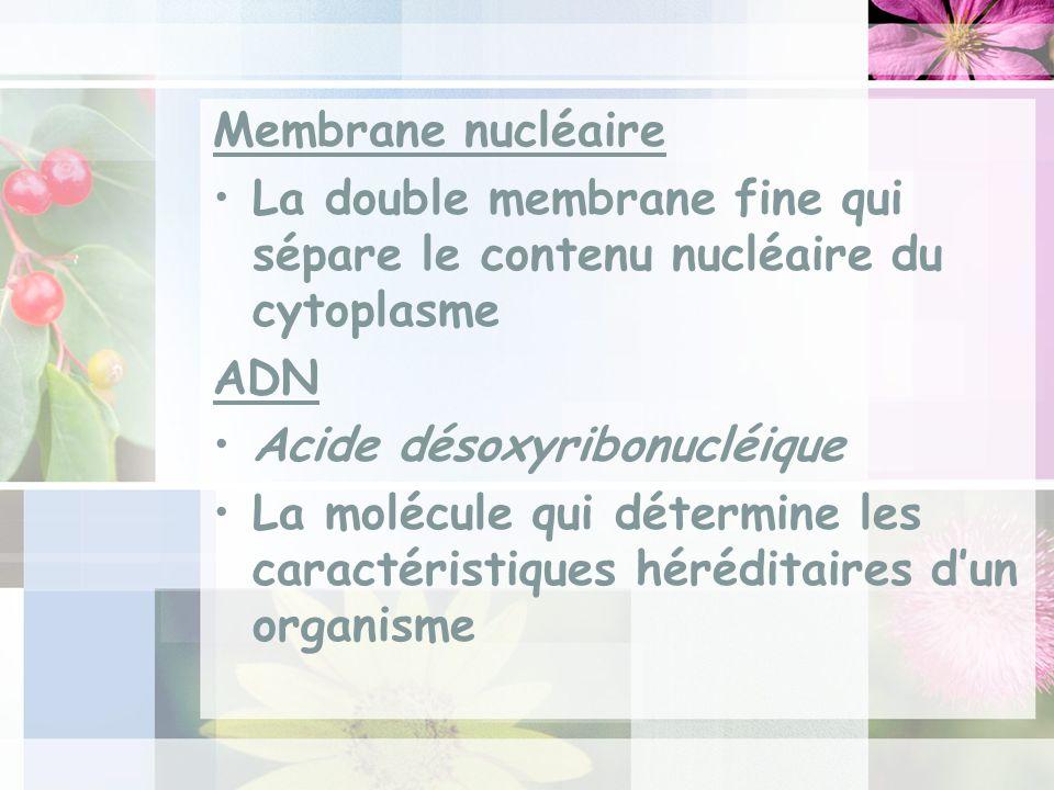 Membrane nucléaire La double membrane fine qui sépare le contenu nucléaire du cytoplasme. ADN. Acide désoxyribonucléique.