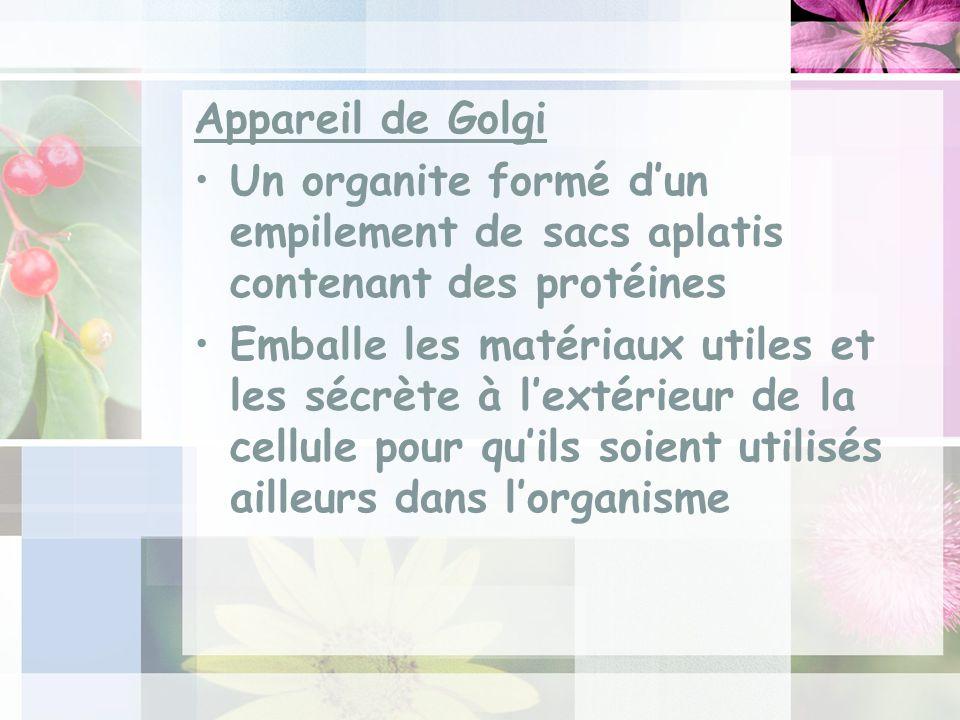 Appareil de Golgi Un organite formé d'un empilement de sacs aplatis contenant des protéines.
